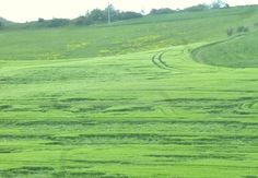 Fields in Koblenz Germany. I love the textures in this picture and all the different shades of green.