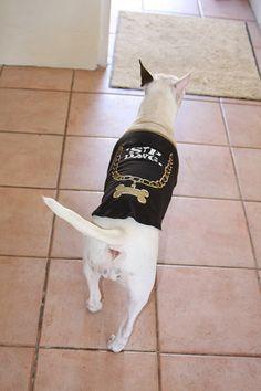 Bull Terrier in T-Shirt