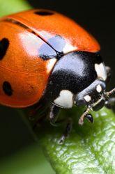 Gå ut på insektsjakt