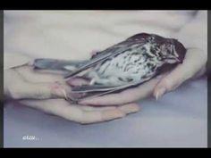 sevdalı kuş . . - YouTube