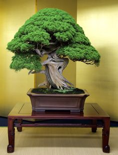 High-class Bonsai by 礼百 Remo Ruettimann on 500px