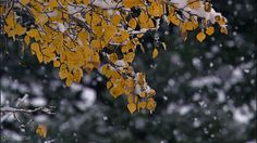 Snow falling winter snow gifs gif winter pictures winter images