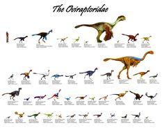 The Oviraptoridae (42 genera)