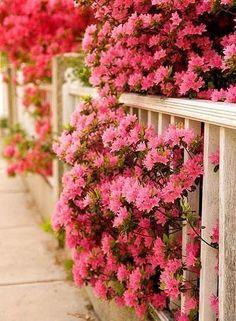 Цветы на заборах