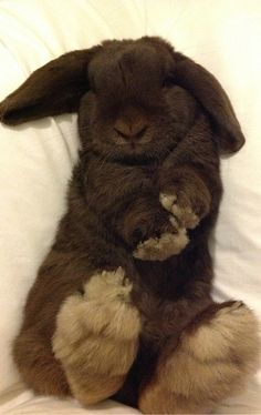 Adorable bunny, from Iryna