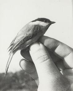 Jochen Lempert, Vogel in der Hand, 1998