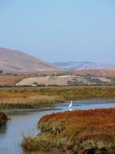 Hiking: San Pablo Bay National Wildlife Refuge | Sonoma County (Official Site)