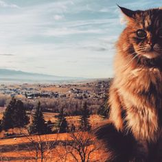 montana morning cat