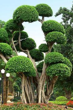 Emmy DE * Cool looking trees Beautiful deco Garden