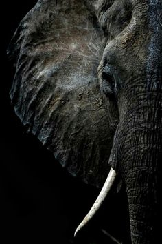 Elephant…in the colors of a stormy sea. Image Elephant, Elephant Love, Elephant Art, African Elephant, African Animals, Elephant Pictures, Elephants Photos, Animal Pictures, Nature Animals