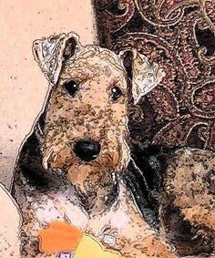 Airedale Terrier dog art portraits, photographs, information and just plain fun. Also see how artist Kline draws his dog art from only words at drawDOGS.com #drawDOGS