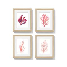 This is a set of 4 Archival Prints of my original sea coral and seaweed watercolor paintings in rich shades of coral, orange, red and salmon. What better way to bring summer into your home than with coral accents? These delightful artworks will bring the warmth of a tropical beach to any space.  All prints come unframed, without the watermark shown.  ► AVAILABLE PRINT SIZES (Choose your desired size from the drop down box):  • MINI → A6 : approx 4 x 6 (10.5 x 14.8 cm) • SMALL → US : 5 x 7…