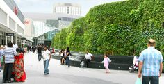 AECOM - Europe - Design + Planning - Living Wall at Westfield Shopping Centre Landscape Architecture Design, Landscape Walls, Riverside Restaurant, Westfield Shopping Centre, Vertical Planting, Public Realm, Construction Services, Tropical Landscaping, Vertical Gardens