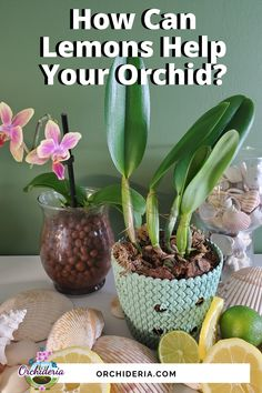 Orchids In Water, Indoor Orchids, Orchids Garden, Garden Plants, Indoor Plants, Patio Plants, Indoor Gardening, Potted Plants, Container Gardening
