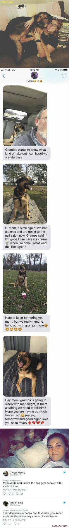 Top 8 #Funny Tweets Collection ft. Funny Dog
