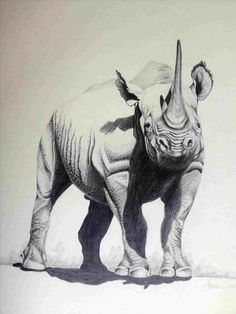 easy drawings pencil realistic animals stylegesture animal drawing basic