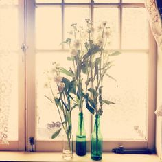 Old beer bottles, make for a beautiful, quirky vase