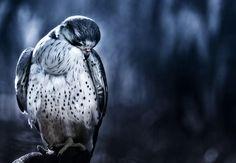 Animal Story by Naveed Hafiz