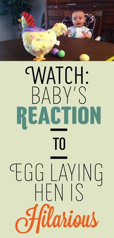 Watch: Baby's Reaction To Egg Laying Hen Is Hilarious!!