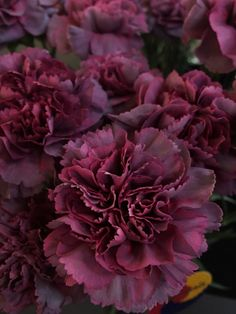 Great Flower Supply Expert Services Available Online Hypnosis Carnation
