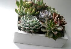 DIY Succulent Centerpieces :  wedding centerpiece succulent Hensandchicks