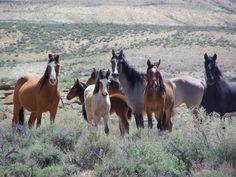 Sand Wash Basin Wild Horses   Tashunka's Band
