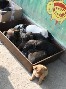 Nobody's dog - Serbian koirat Pet Organization, Volunteer Work, Serbian, How To Raise Money, Rescue Dogs, Toy Chest, Something To Do, Homes, Animals