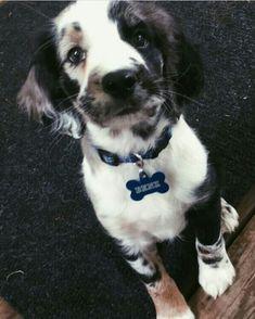 El perro espera un regalo - Süße Tierbilder // Cute animal pictures - Puppies And Kitties, Cute Puppies, Cute Dogs, Doggies, Tiny Puppies, Cute Funny Animals, Cute Baby Animals, Animals And Pets, Farm Animals