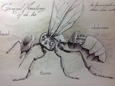 DeviantArt - Discover The Largest Online Art Gallery and Community Animal Sketches, Animal Drawings, Art Drawings, Bordado Popular, Steampunk Drawing, Steampunk Animals, Insect Tattoo, Desenho Tattoo, Blackwork