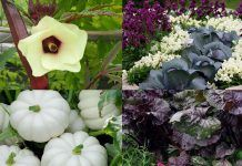 18 Most Colorful Vegetables You Need To Grow In Your Garden