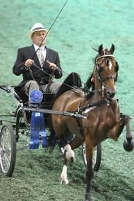 2012 Kentucky State Fair World's Championship Horse Show - USEF Network.  Larry Ella driving Giselle.