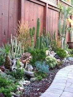 60 amazing desert garden landscaping ideas for home yard – cactus Succulent Landscaping, Succulent Gardening, Landscaping With Rocks, Front Yard Landscaping, Succulents Garden, Backyard Landscaping, Landscaping Ideas, Cactus Garden Ideas, Outdoor Cactus Garden