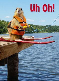 funny, squirrel water ski cute animal, humor  Swag: http://www.cafepress.com/tlconline