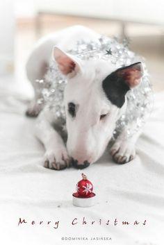 Christmas #Bullie