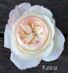 The Blush Pink Rose Study | Flirty Fleurs The Florist Blog - Inspiration for Floral Designers