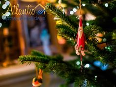21 eco-friendly Christmas tips Merry Christmas Hd Images, Small Christmas Trees, All Things Christmas, Kids Christmas, Father Christmas, Christmas Gift Guide, Christmas Wishes, Christmas Gifts, Christmas Ornaments