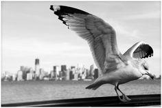NY | Fotografia de bollaz | Olhares.com