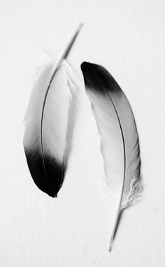 Black white feathers