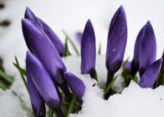 by Heather Aplin, via New Years Sales, Spring Has Sprung, Forever, Let It Be, Flowers, Plants, Instagram, Blog, Photos