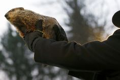 Groundhog Day 2014: What You Need to Know About Punxsutawney Phill (+Video)