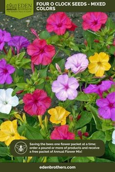 Pictorial Packet Wallflower Choice Mixed 500 Seeds Flower Mr Fothergills