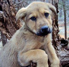 The Adoptable Shepherd Mix Puppies