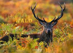 Wo sich Fuchs und Hase 'Gute Nacht!' sagen. Ackermann Kalender Tierwelt Wald 2013