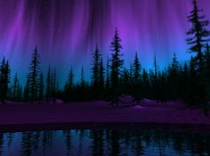 aurora borealis with pine trees - Google Search