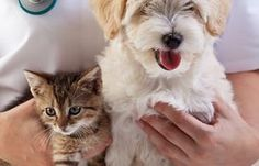 When clipping a puppy's toenails, start slow. Introduce your little dog to them before you begin cutting. You may only be able to get a single nail done during a sitting. It could take some time for puppy to become comfortable with the idea of nail clipping, but soon, you will be able to get …