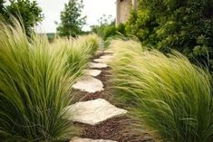 13 Desert Plants to Use When Landscaping | Hunker