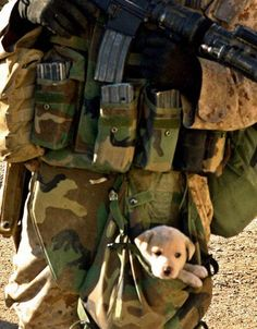 David Venegas from Chicago, IL, 3rd Squad Leader, 3rd Platoon, L Company, 3rd Battalion, 5th Marine Regiment, 1st Marine Division, carrying a puppy that he saved from rubble. #puppy #dog #budgettravel #travel #cute www.budgettravel.com