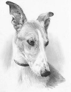 """Hand made Pencil Graphite Drawing of a Dog on 18x24"""" Bristol Paper Charcoal (Richard Romero)"""