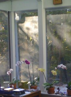 Angel in the window of my studio above the orchids.