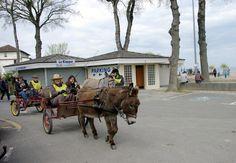 JNAL 2015. Les ânes en piste. Courtesy: Traits en Savoie. Excenevex, Haute-Savoie (France).